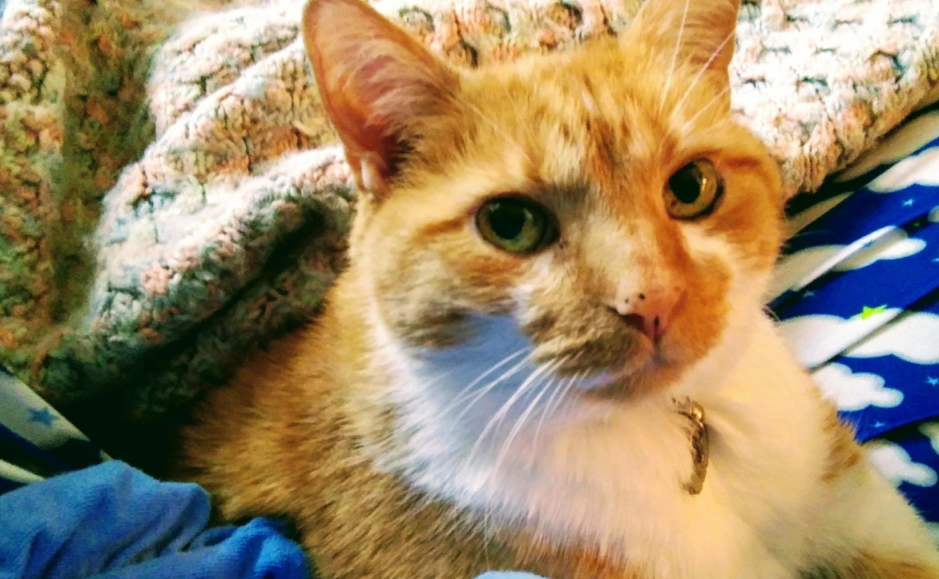 Tango - Cat#7  (9 votes)