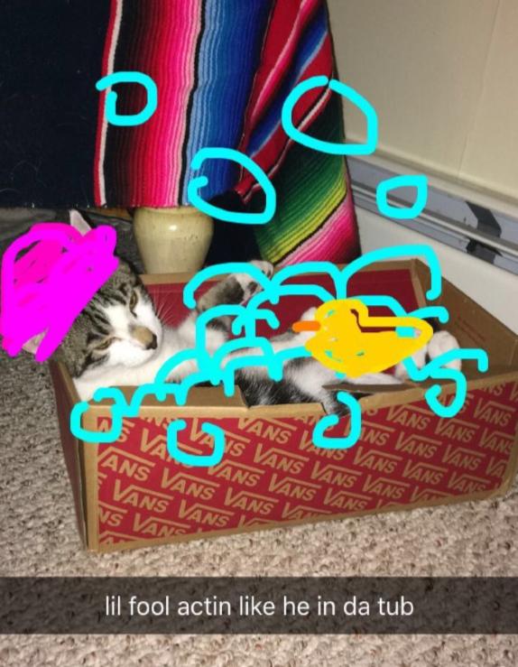 Baxter - Cat# 8