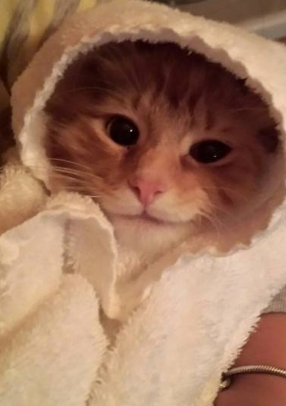 Ralphy - Cat# 11