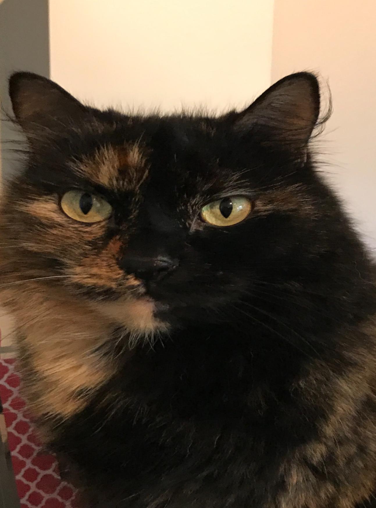 Sasha - Cat# 12