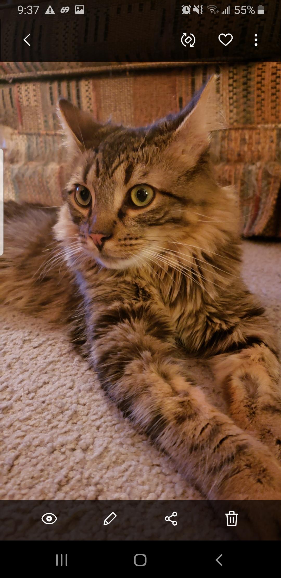 Nala - Cat# 19  (4 votes)