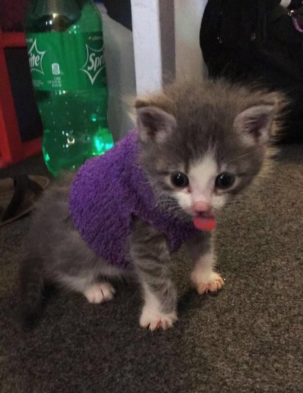 Bhoomi - Cat# 16  (1 vote)