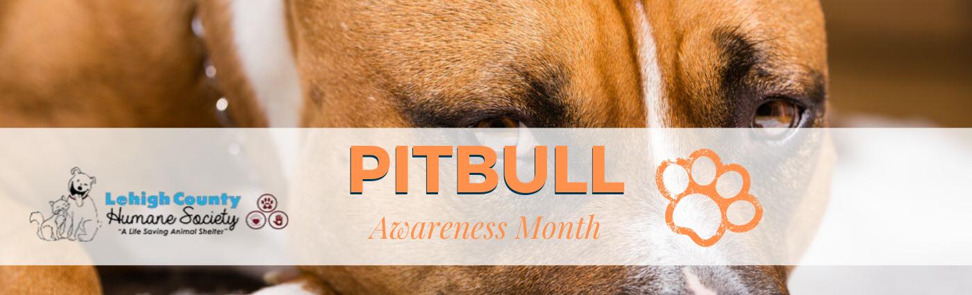 Pitbull Awareness Month- Graphics.png