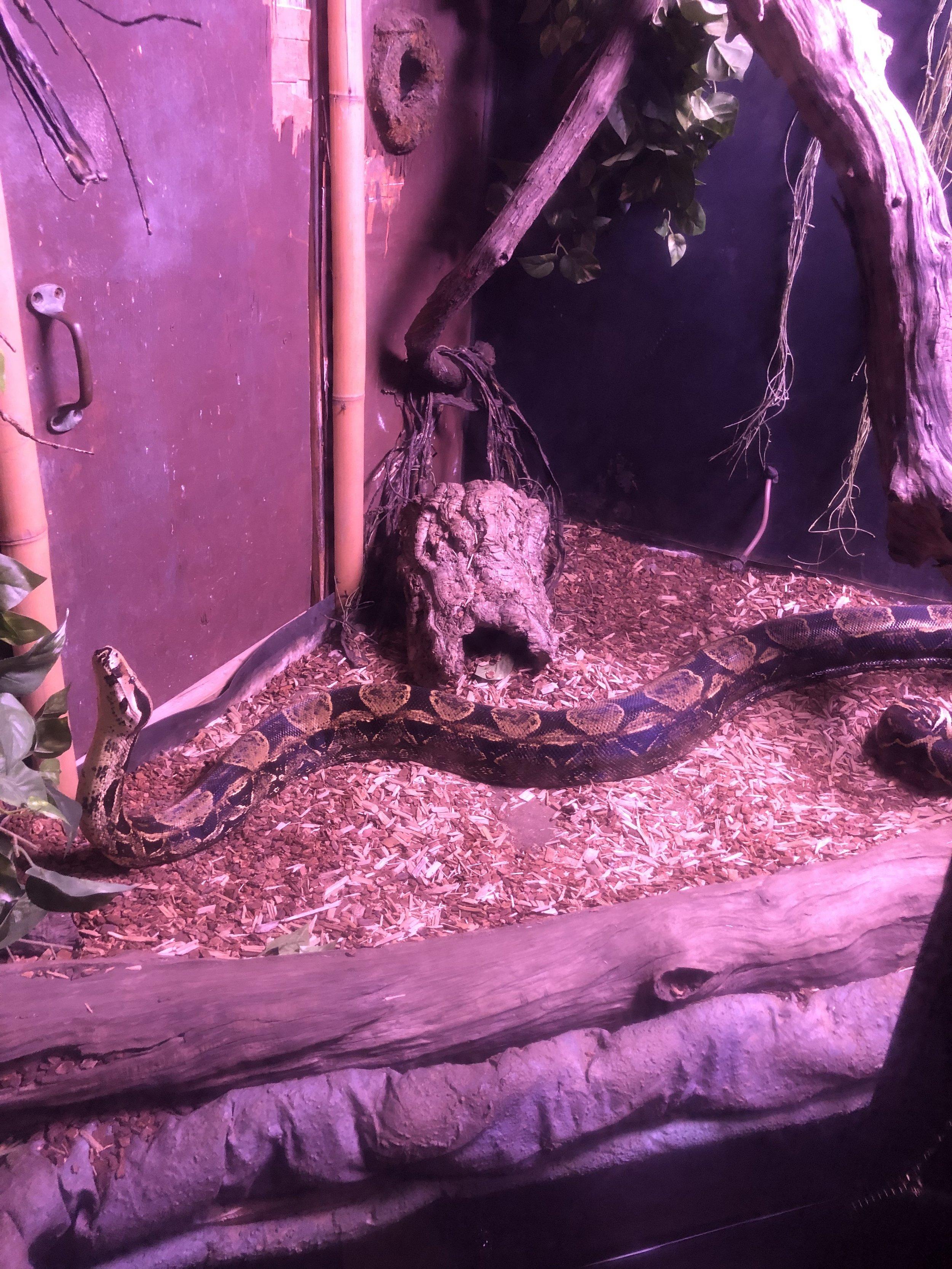 Aquarium: Snake