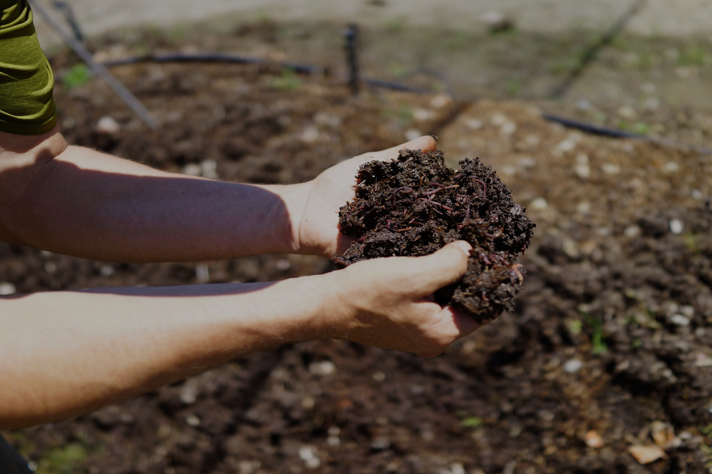 It all starts with the soil. -