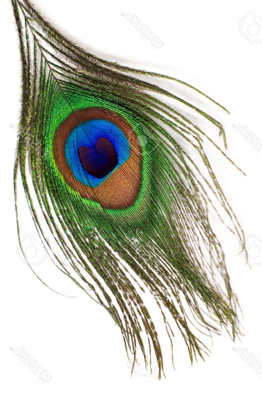 Peacock+feather.jpg