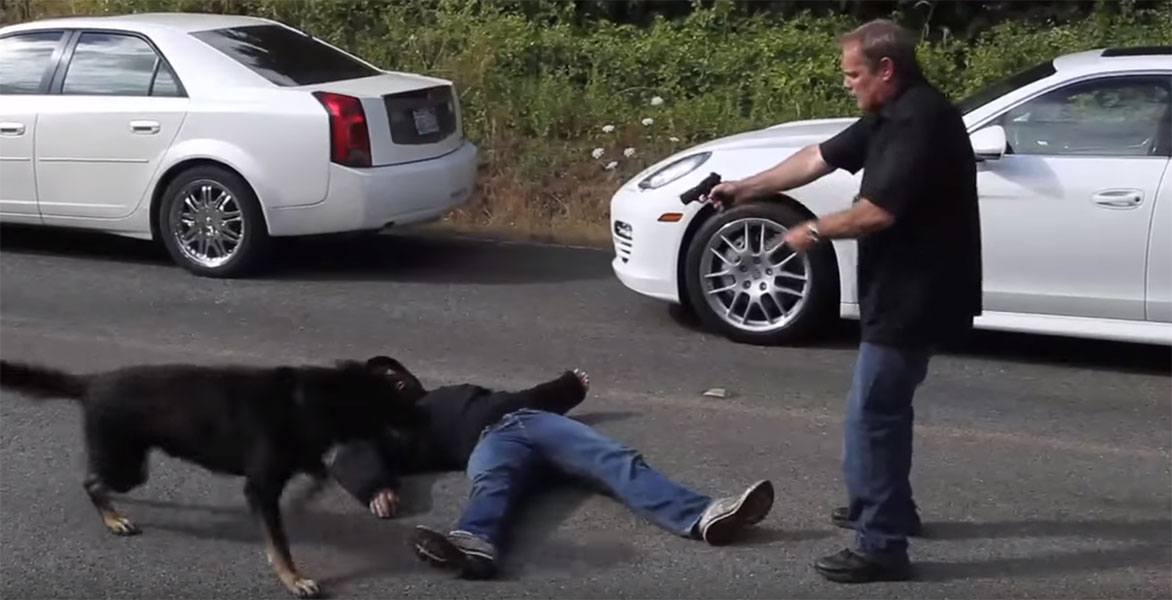 Practical Protection Dog Guards Porsche Panamera