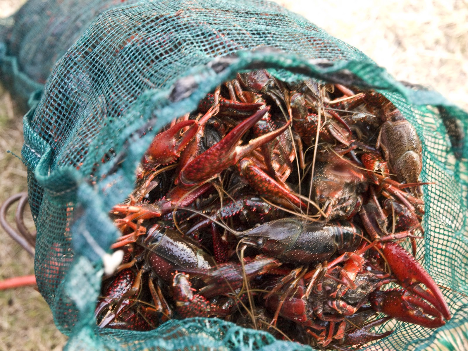 mm-crawfish-bag.jpg
