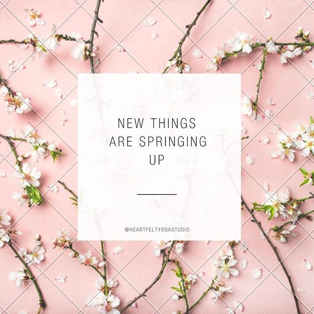 We have some really fun news springing up on May 1st 🌷