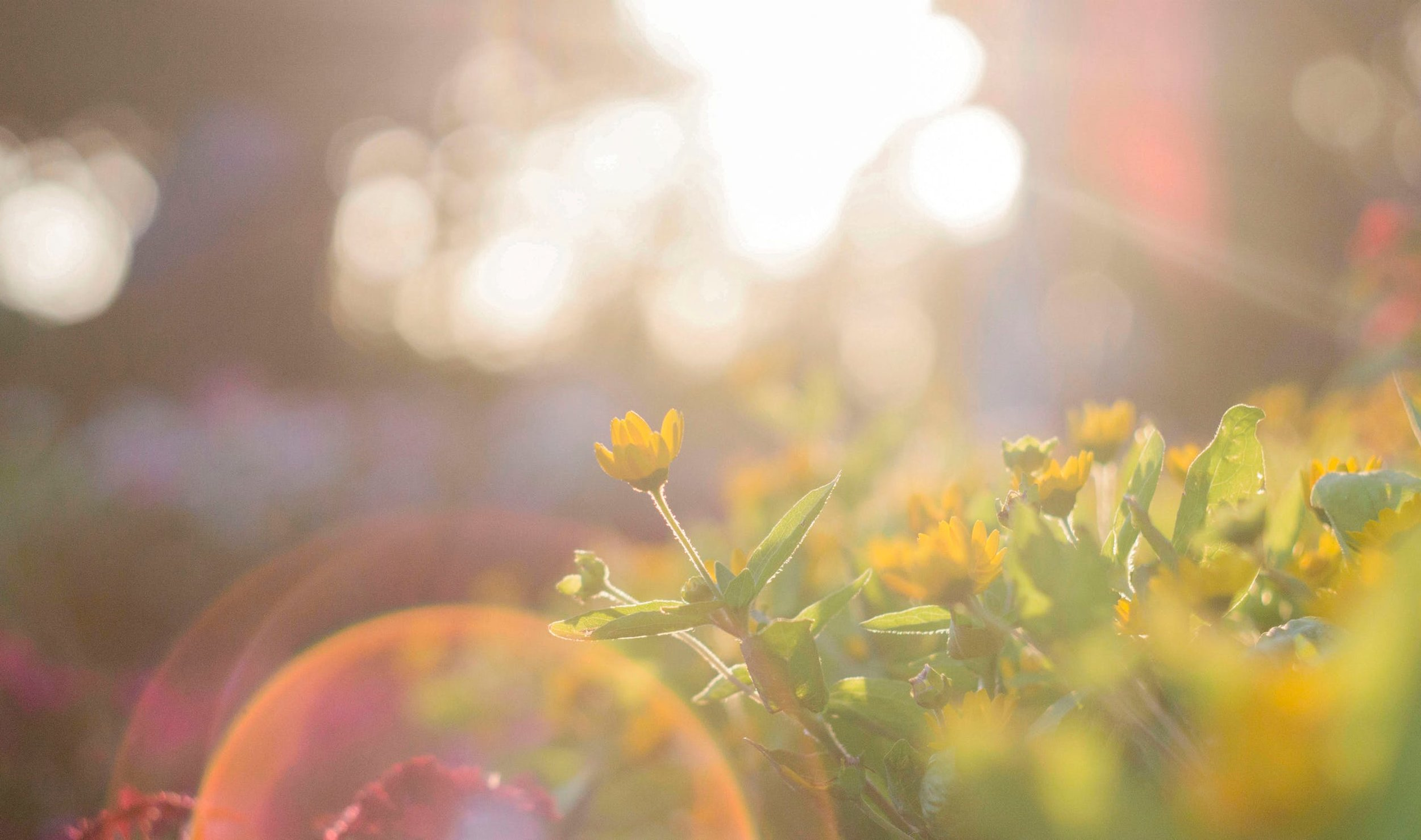 sun-and-flowers.jpeg