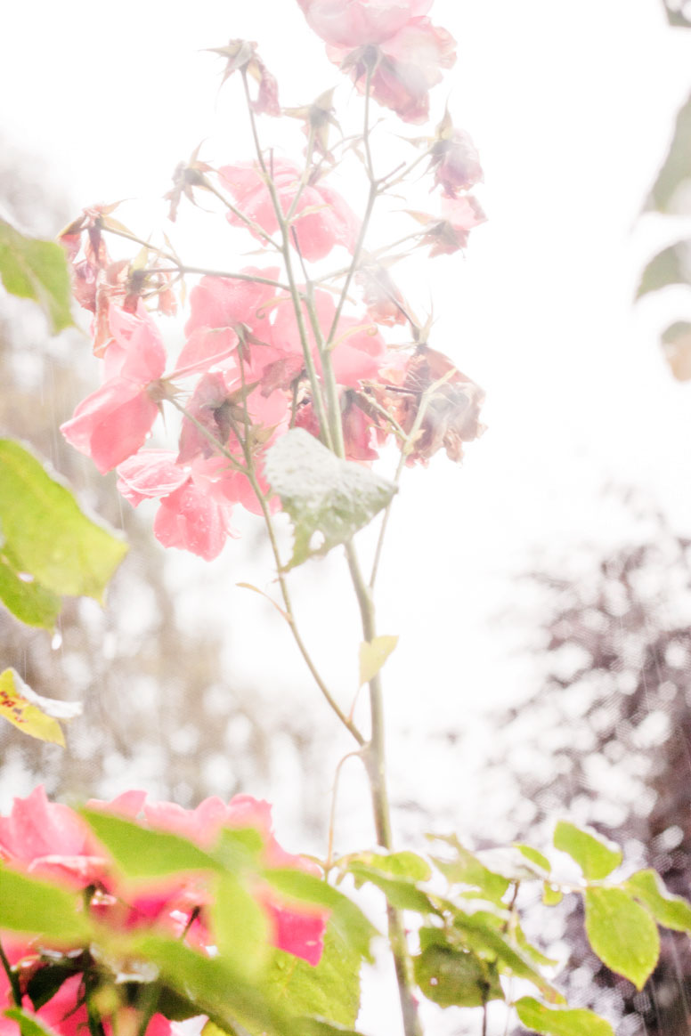 6d236-16-floral.jpg