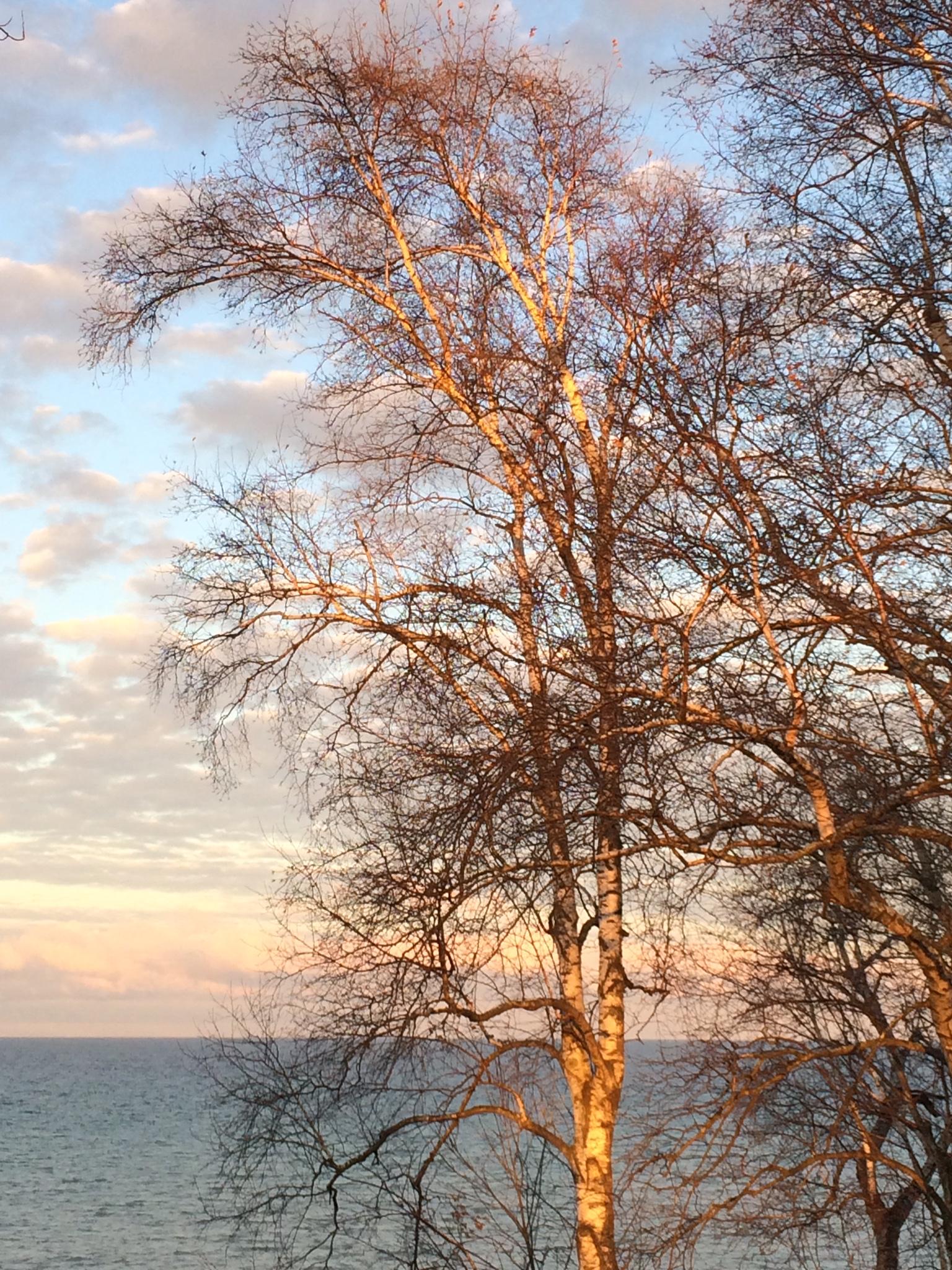 Afternoon Trees.JPG
