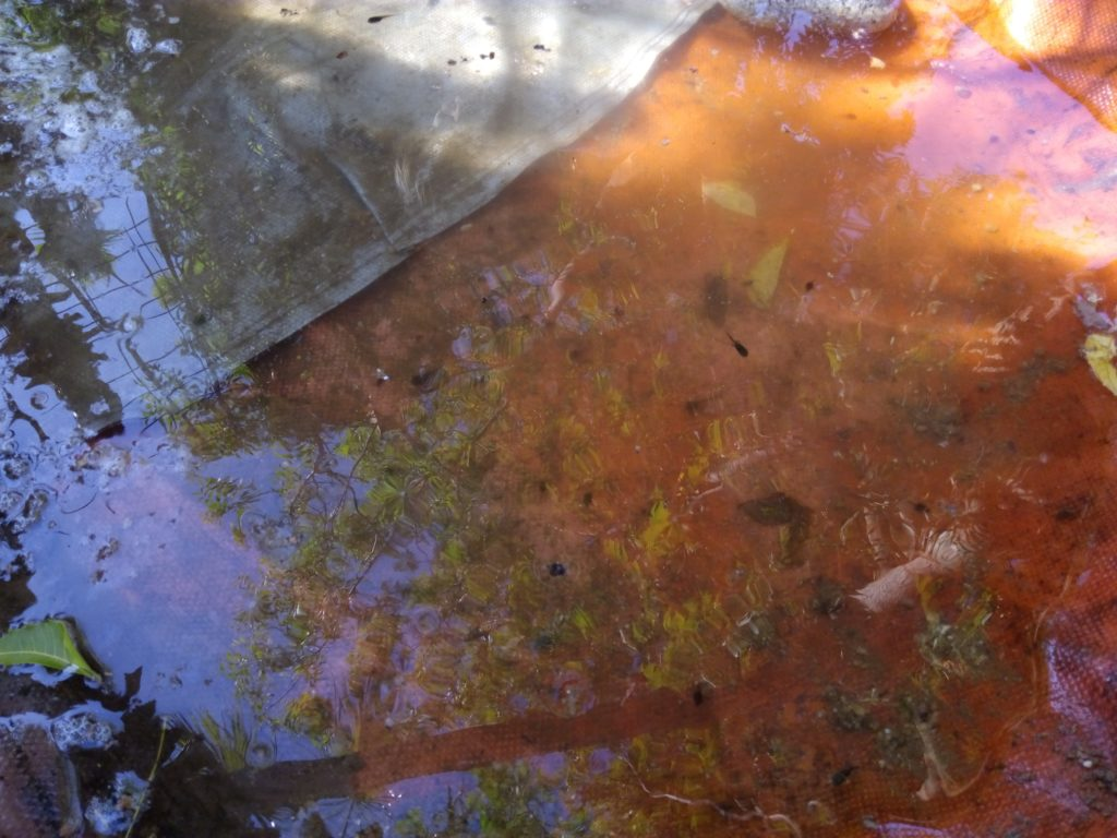 Rainy season starts in September in Todos Santos Baja