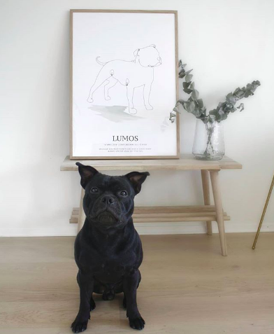 Personlig poster av Staffordshire terrier Lumos
