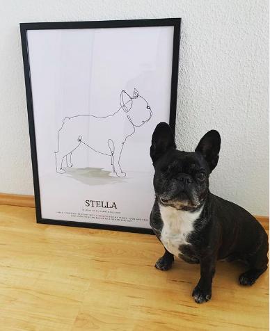 Fransk bulldog Stella med personlig tavla