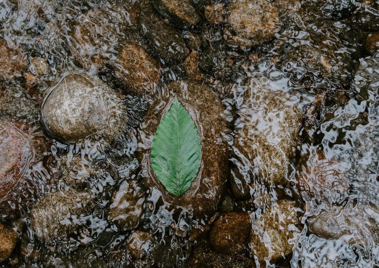 leaf-floating-tranquil-water.jpg