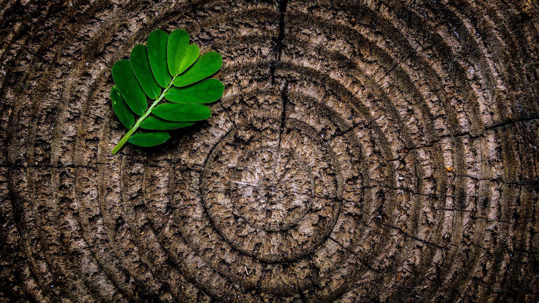 leaf-tree-rings.jpg