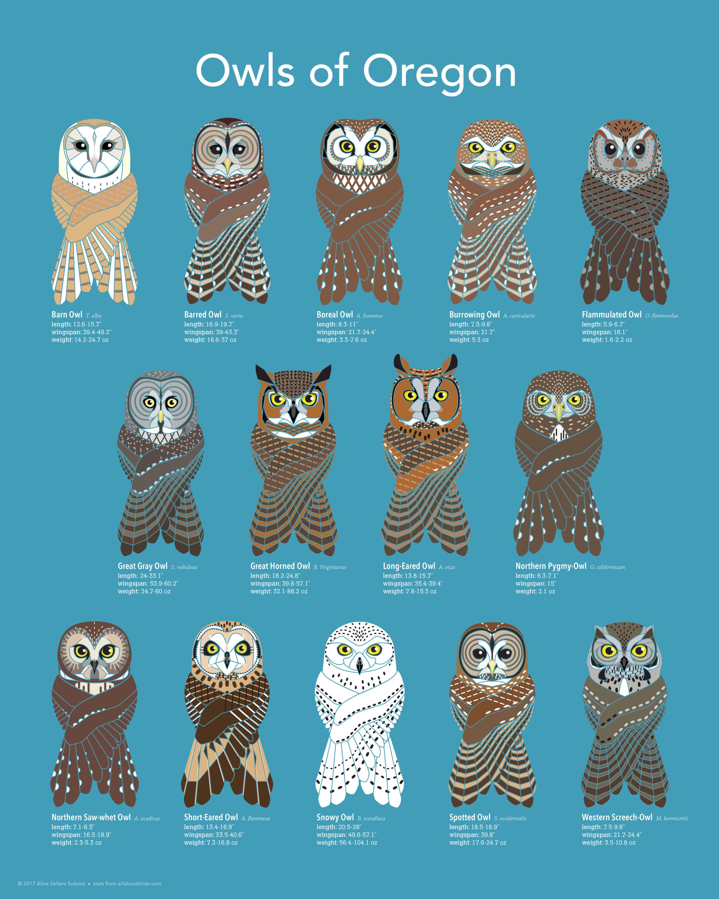 owlposter_web.png