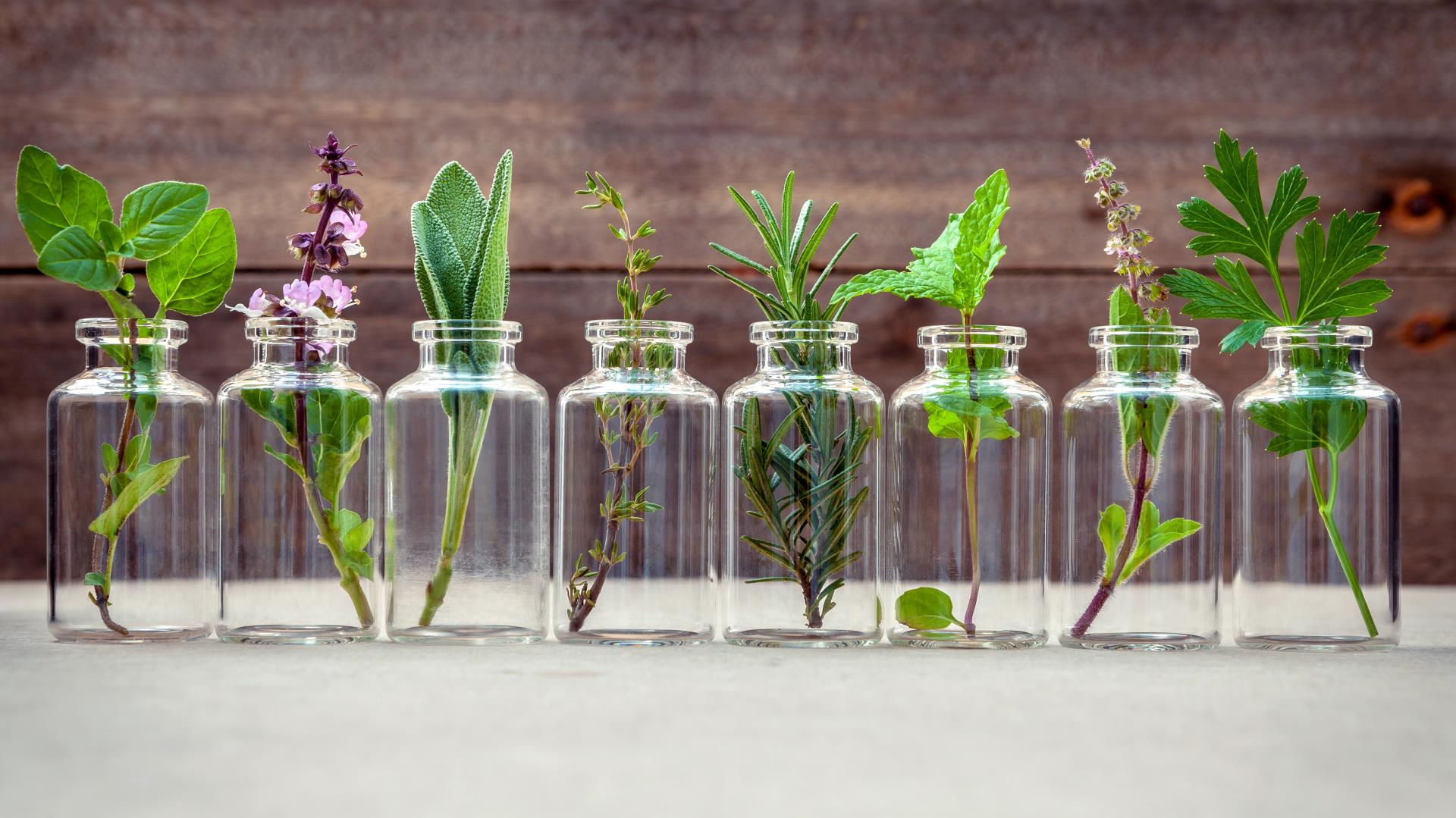 Essential oils for health and wellness