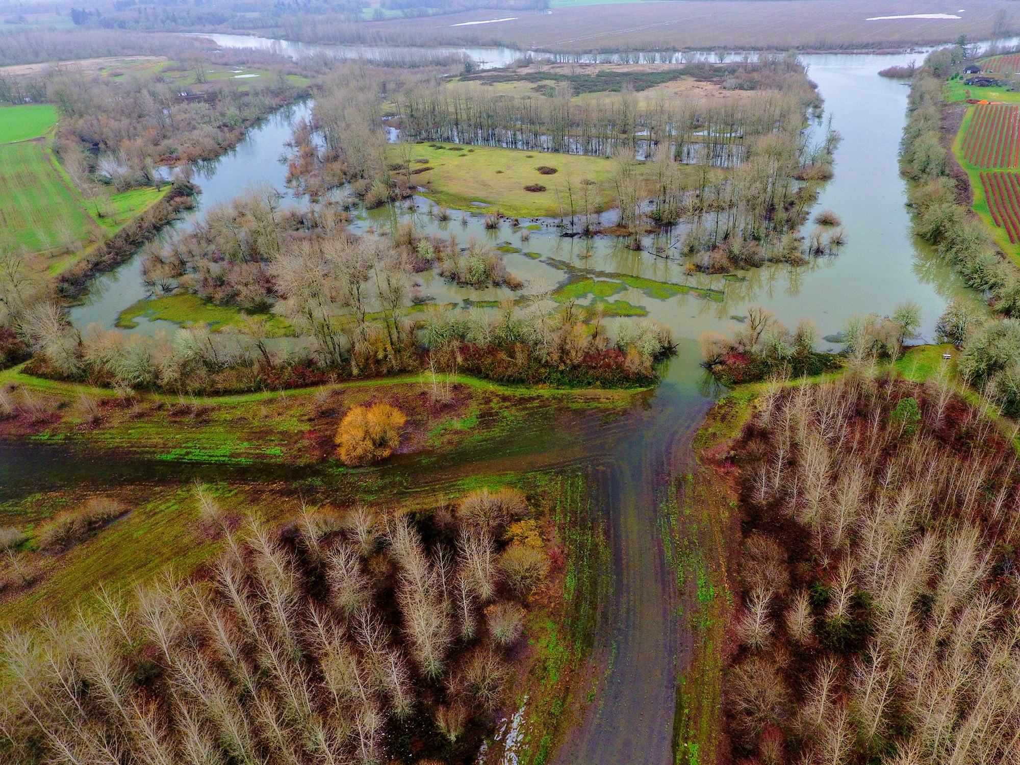 Aerial photo of Snag Boat Bend on the main stem of the Willamette River during last springs high water.