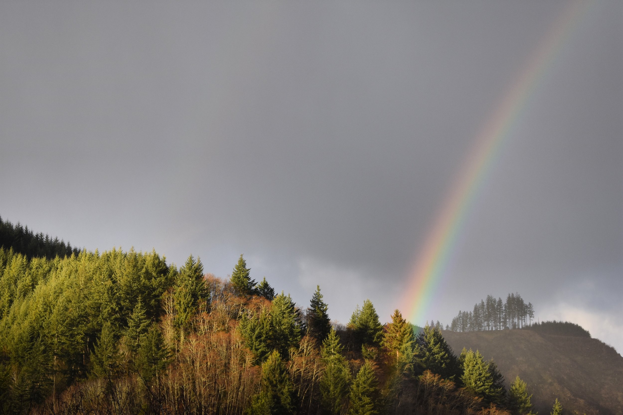 Rainbow over North Bend, OR