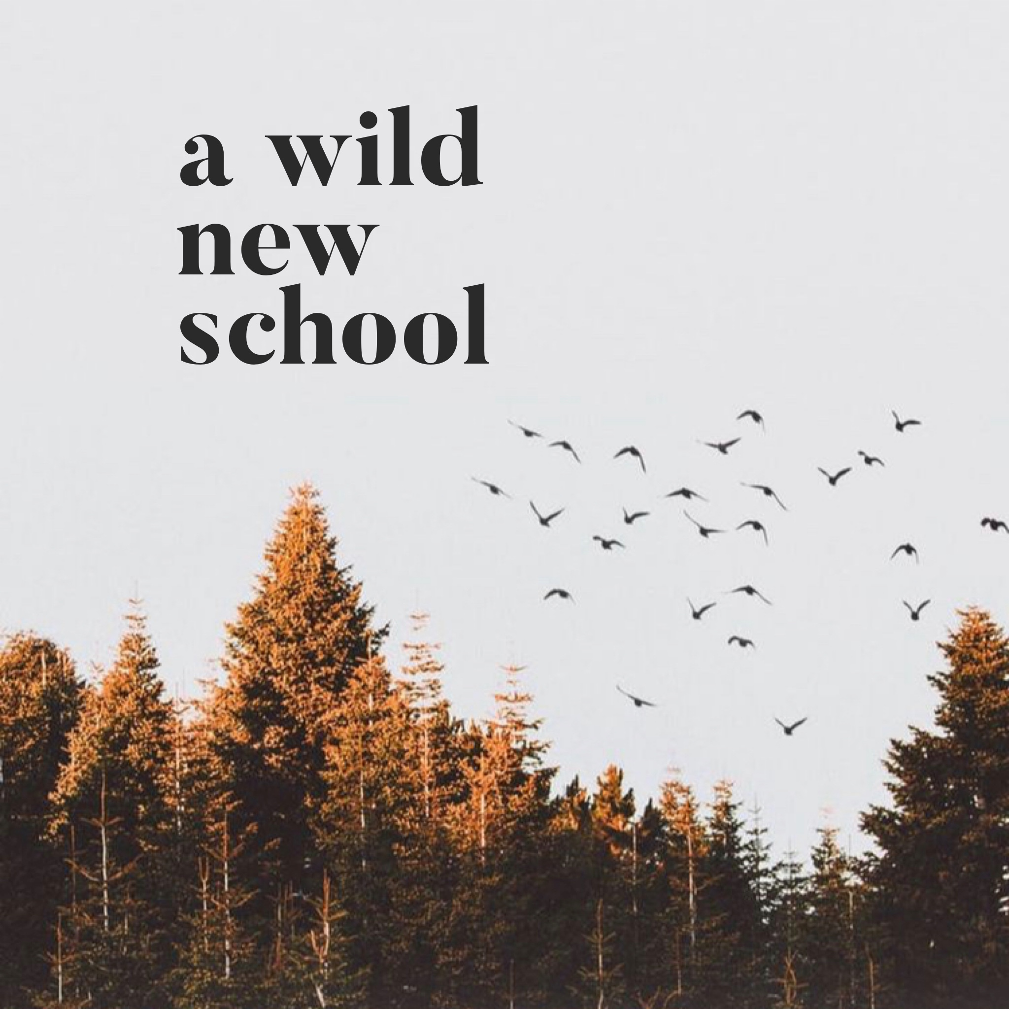 - Sign up here for A Wild New School's Newsletter! You will receive emails that offer career support, helpful resources, mindfulness practices, and additional information about each of our Seasonal Sessions for A Wild New School. Our Summer Session: Expand is now closed for enrollment but we will be sharing details soon about our upcoming Fall course.Sign up for our newsletter here!!