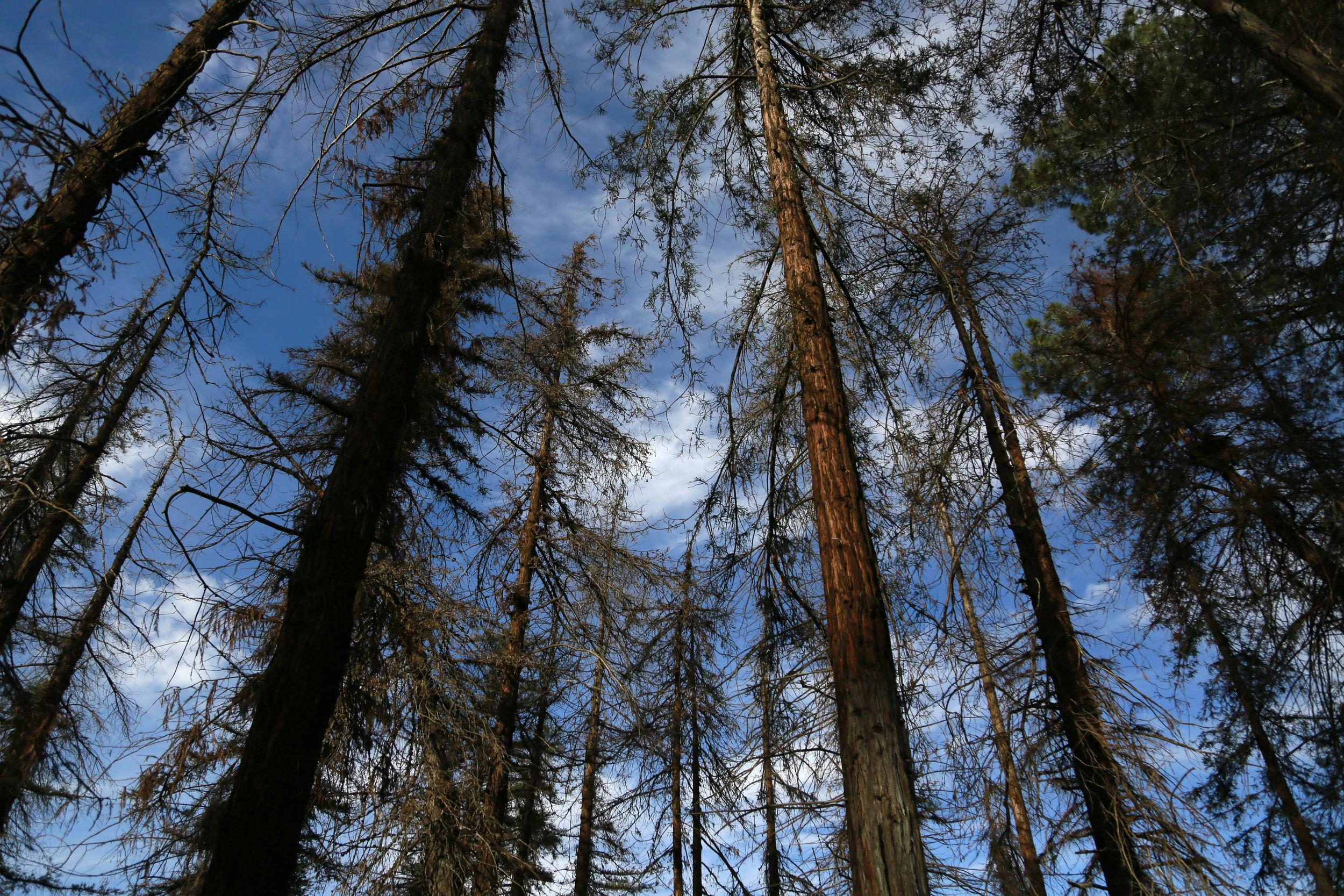 Ecology -