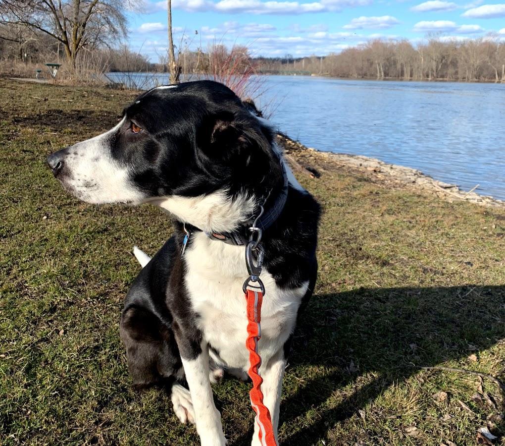 Satchel, a Dogs Run the Fox family member.