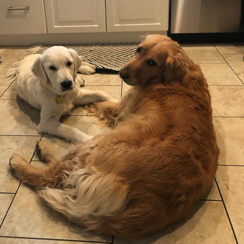 Brie and Sage