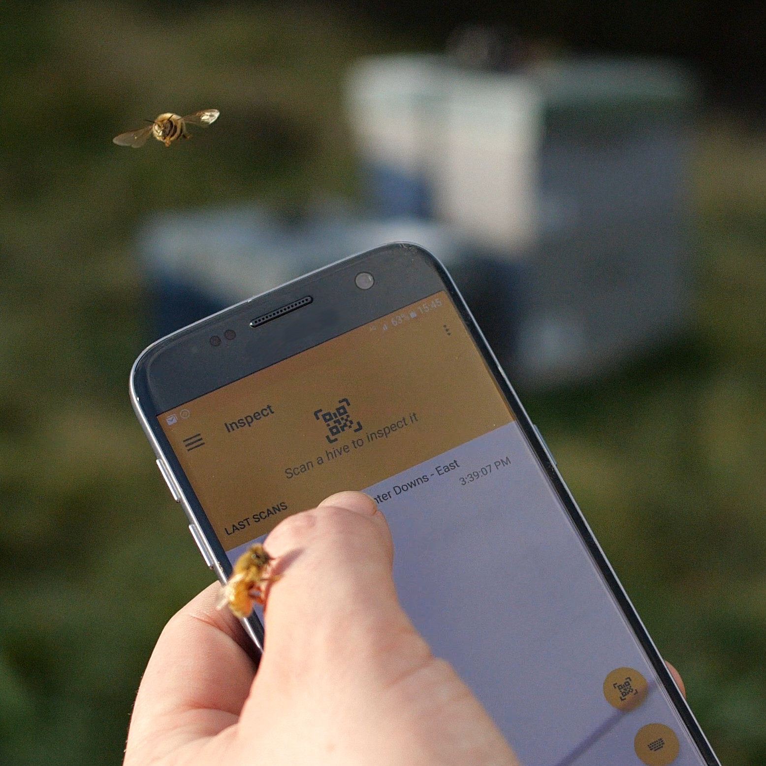BeeApp in the field while some friendly bees check out what all the buzz is about