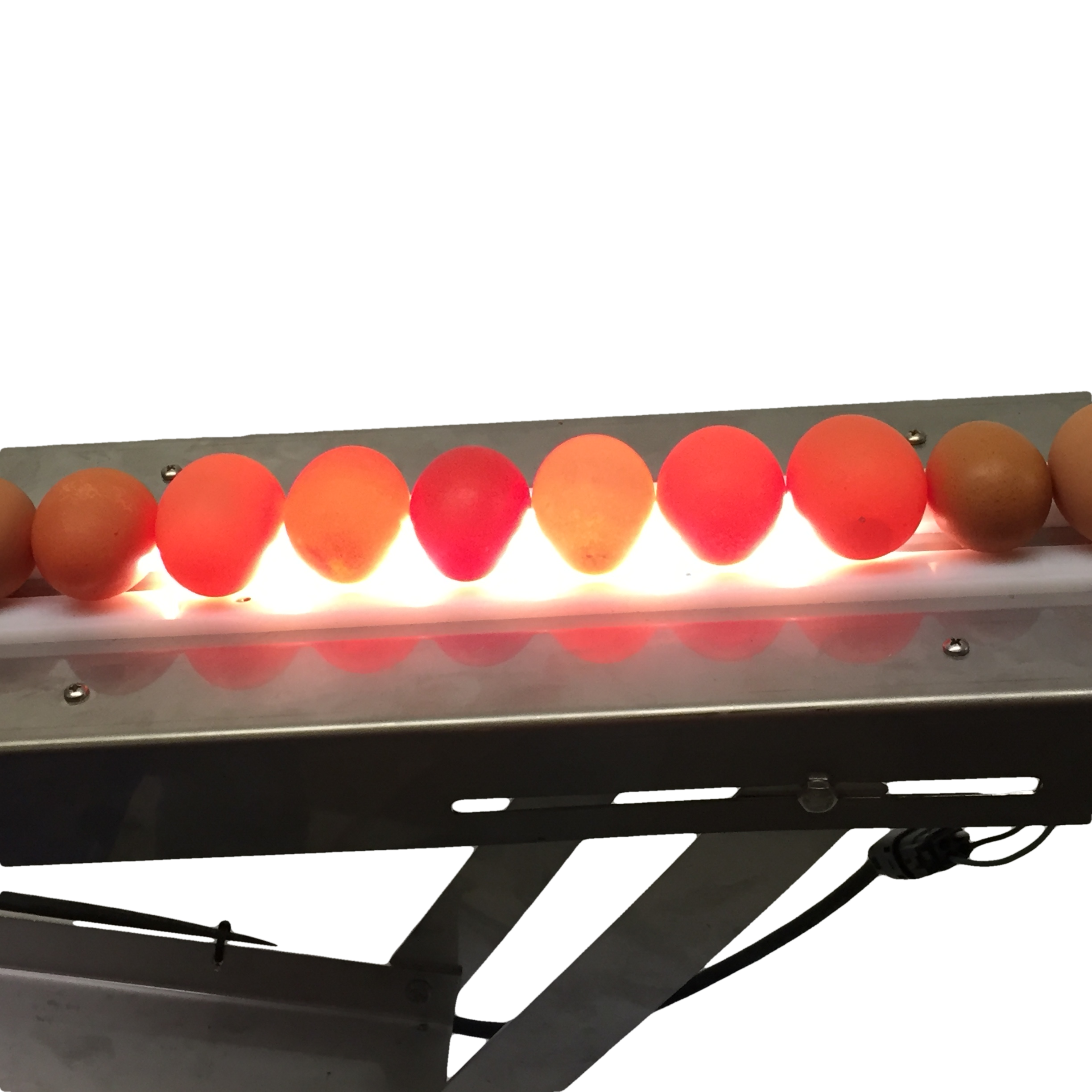 Optional LED candling system mounted under the runway into the egg washer.