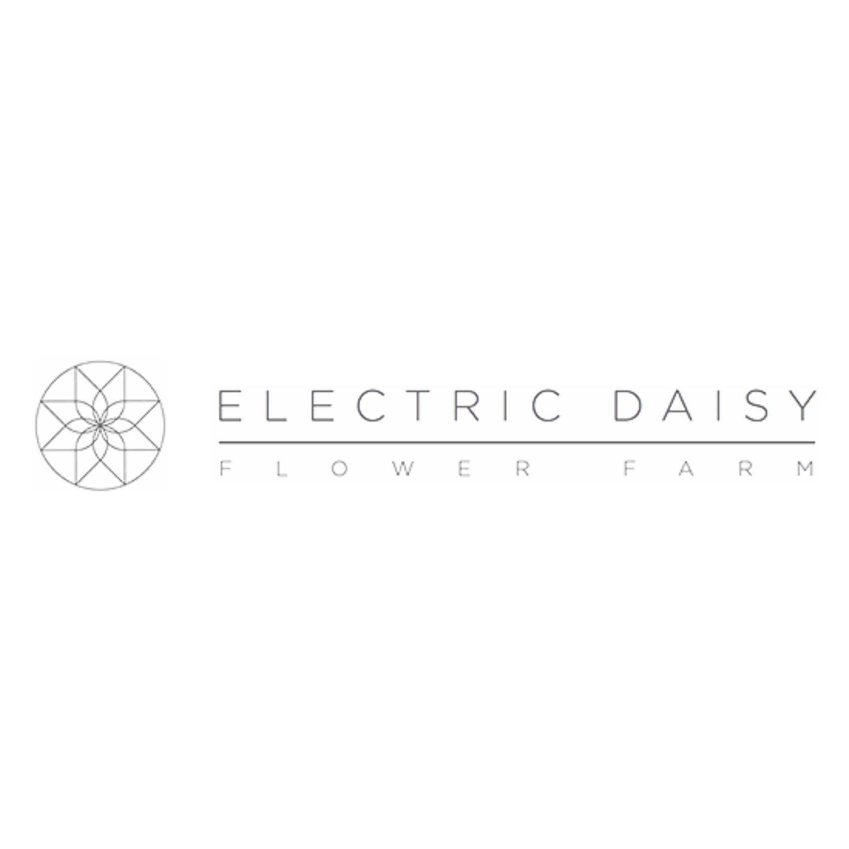 Electric Daisy Flower Farm   We have recently started working with Fiona and the team at this North Somerset flower farm providing media and communications support, planning and delivery.