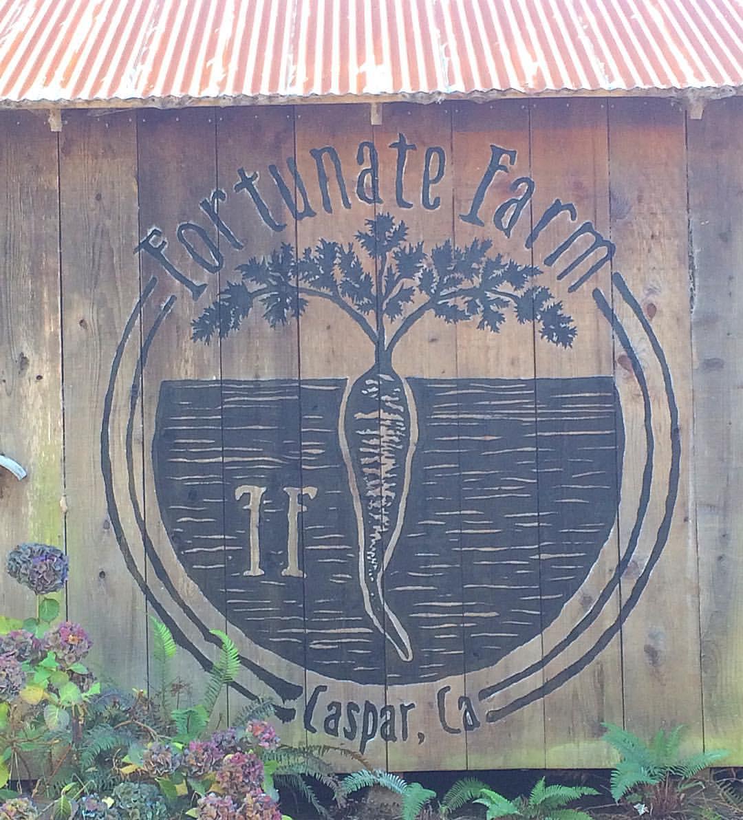 FORTUNATE FARM - CASPAR