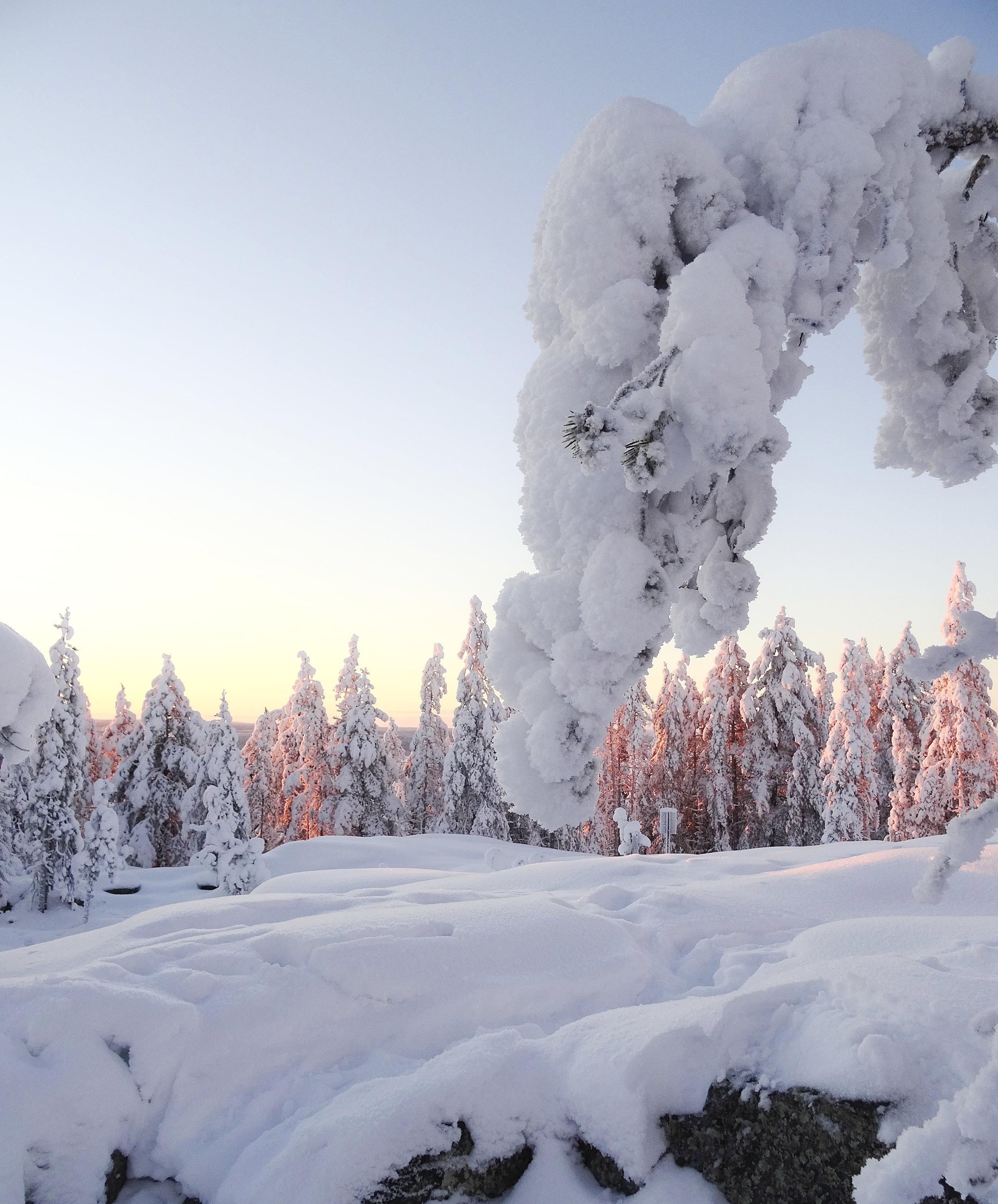 rovaniemi-lappi-suomi-lumi-tykkypuu-matkablogi-mona-kajander.jpg