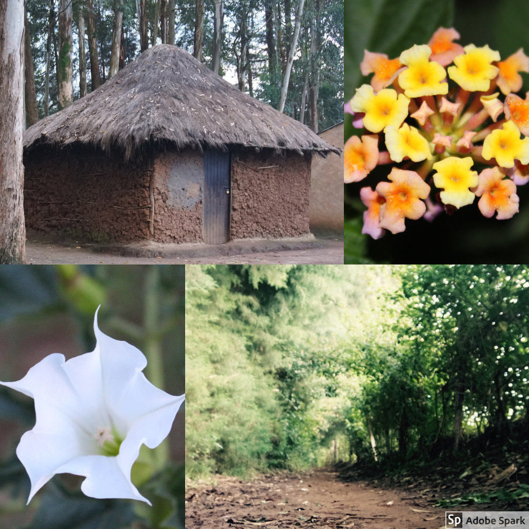 This day, Bapa brought us again on a little walk. Here, we were able to catch pictures of some of the beautiful wild flowers, the trees, and some of the houses members of the community lived in.