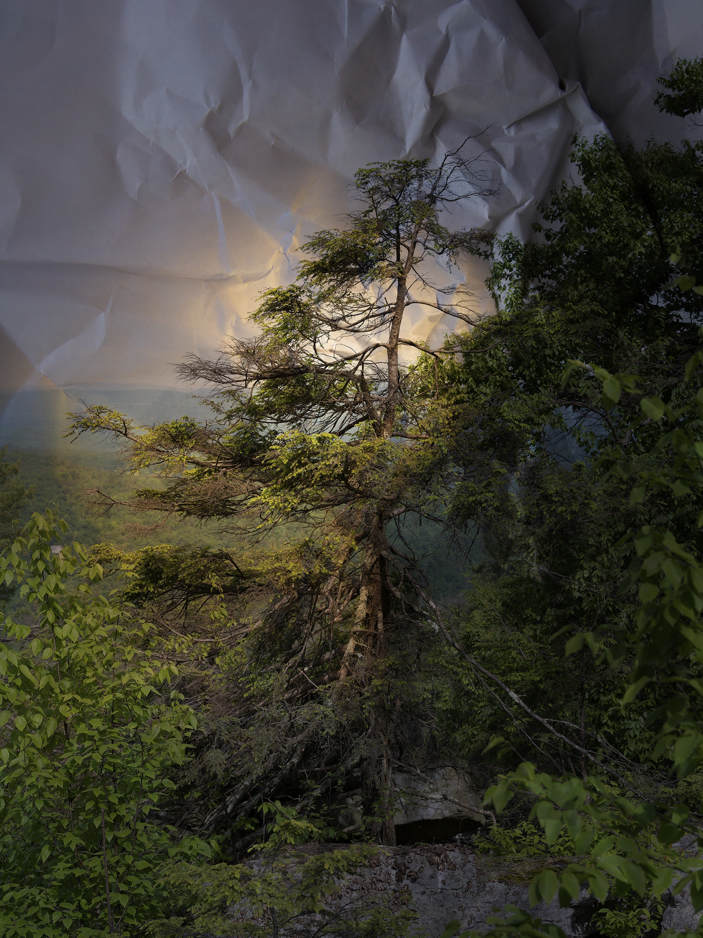 © Laura Plageman, Hemlock, Mohonk Preserve, NY, 2019  Commissioned Photographer LightField Festival 2019 | Photo + Synthesis