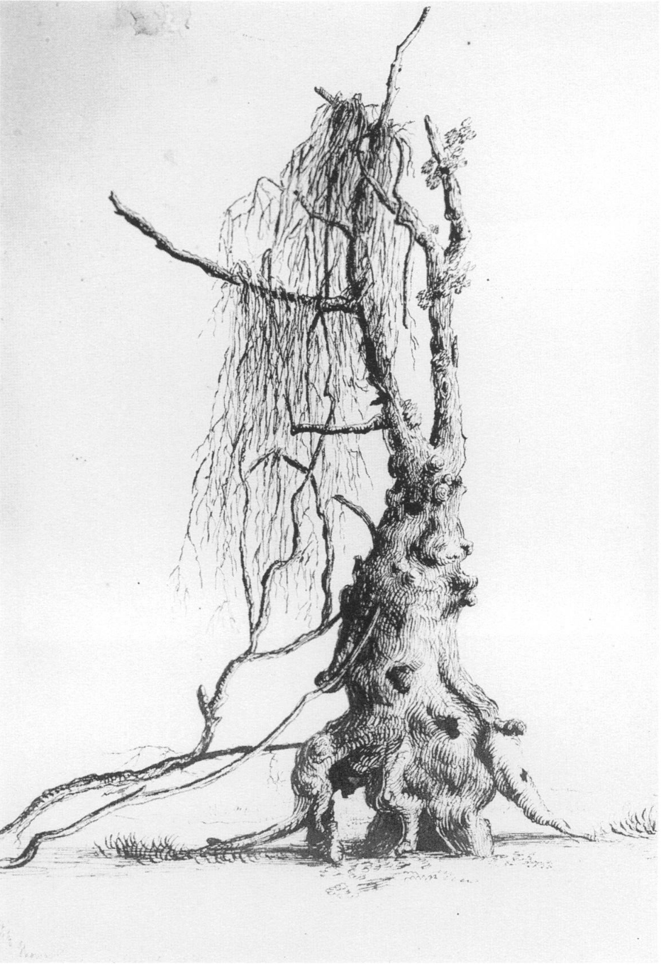 "© Thomas Cole. BUTTON WOOD TREE. May 16, 1823. Graphite and pen and brown ink on tan paper, 13 1/2 x 16 7/8"". Collection, Albany Institute of History & Art, Gift of Florence Cole Vincent.  From: Felker, Tracie. ""First Impressions: Thomas Cole's Drawings of His 1825 Trip up the Hudson River.""  American Art Journal , vol. 24, no. 1/2, 1992, pp. 60–93.  JSTOR , www.jstor.org/stable/1594588."