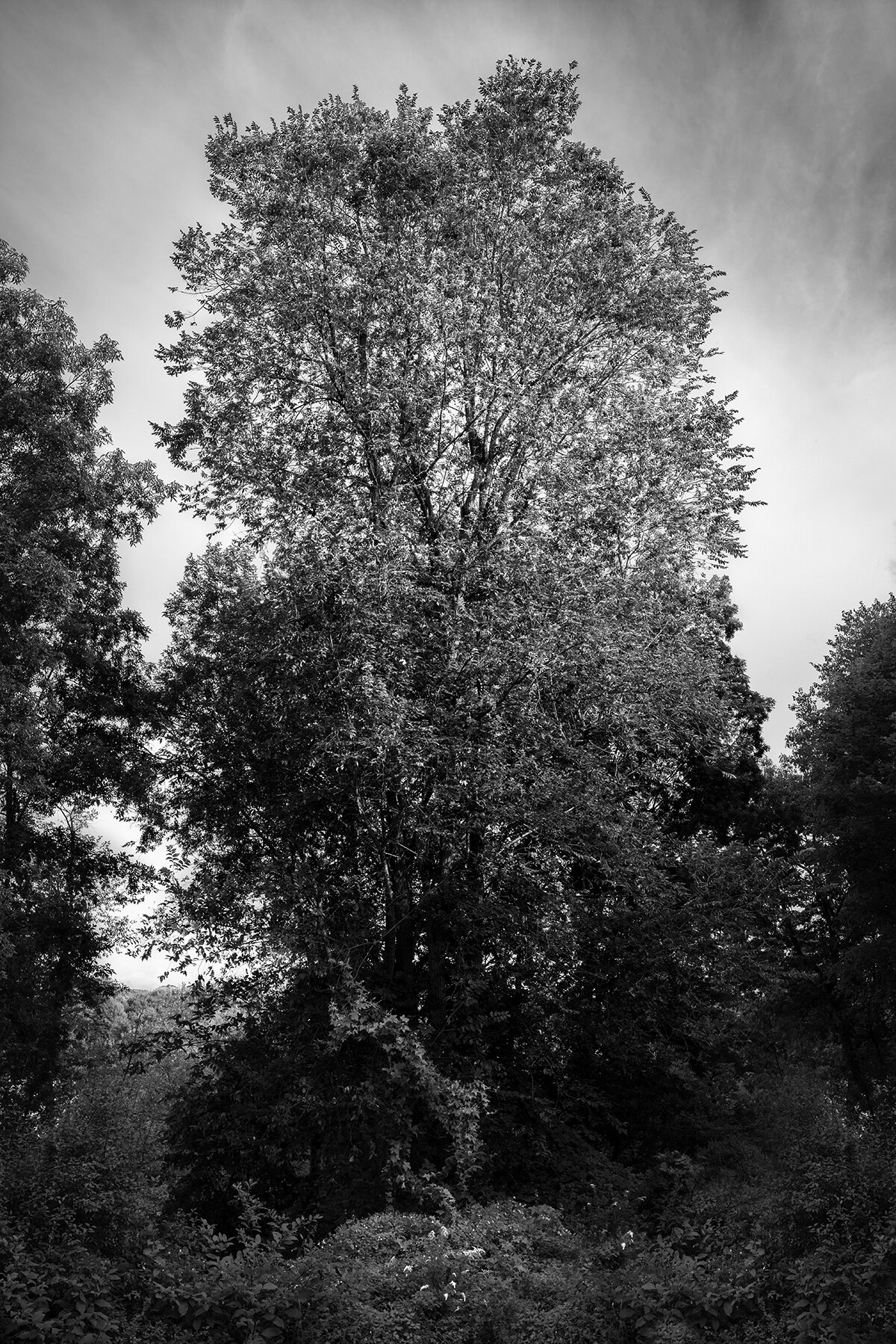© Sarah Bird.  Ash Tree, Hudson Valley , 2019. Archival digital print mounted on dibond. 20 x 30 inches.