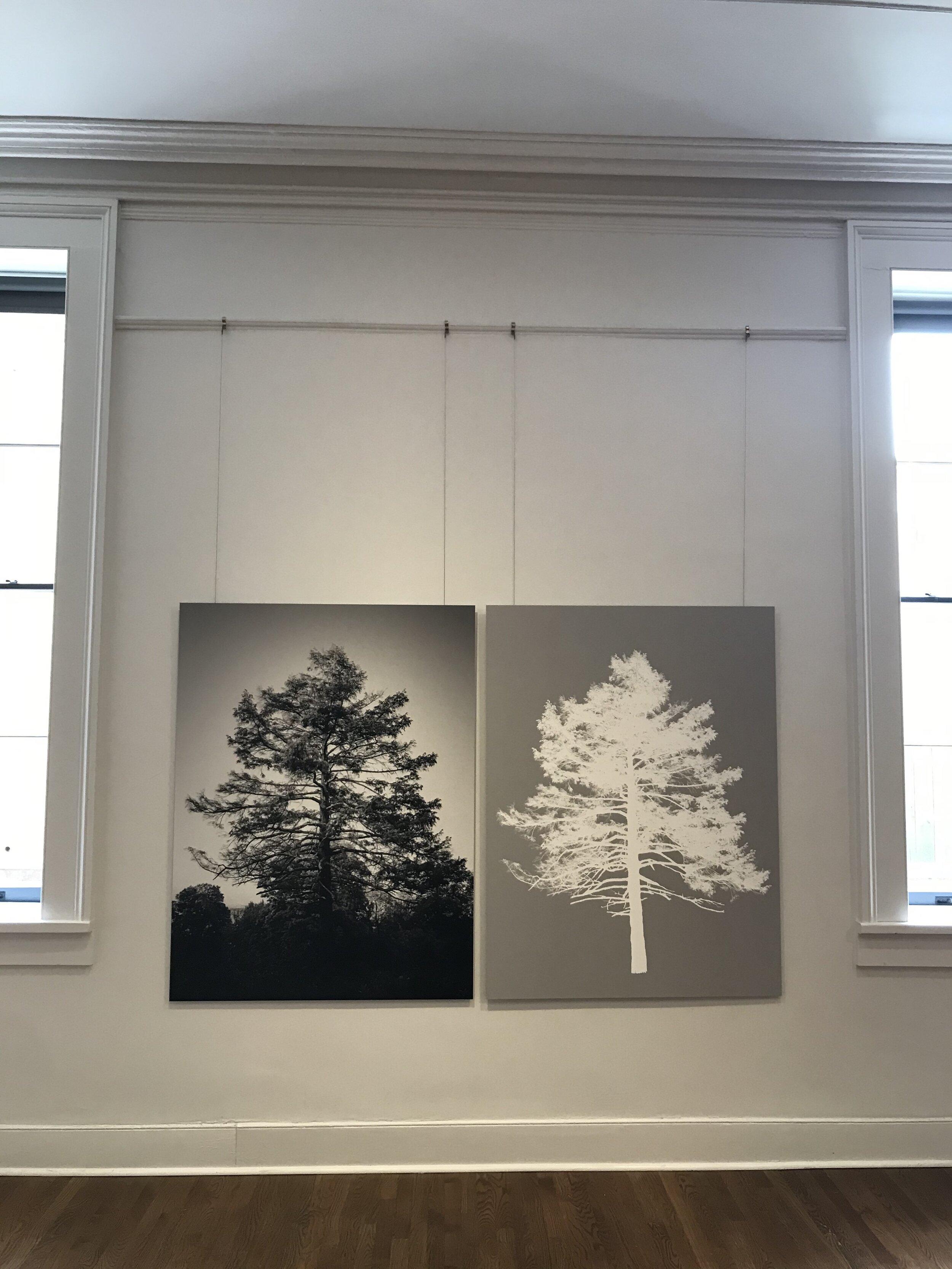 © Sarah Bird.  Frederic Edwin Church's Eastern Hemlock , 2019. Archival digital print mounted on dibond. Diptych, each panel 45 x 60 inches.