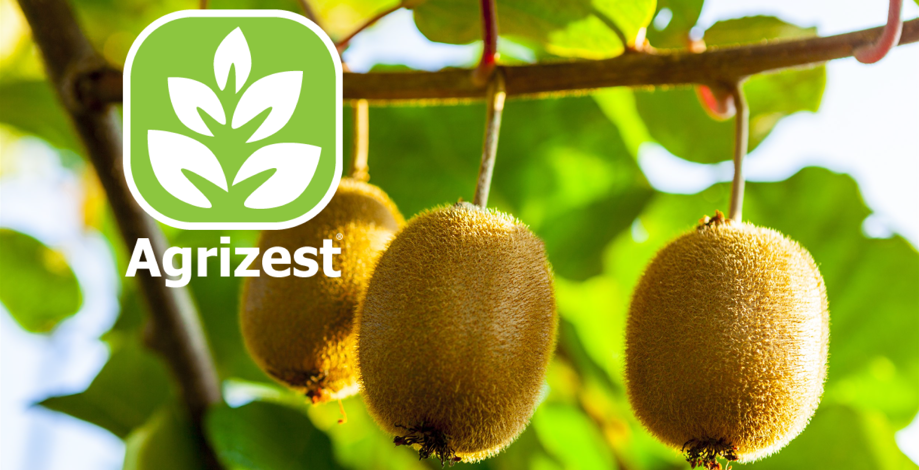 Agrizest is an elicitor of the phenylpropanoid pathway for plant health and orchard gate returns.