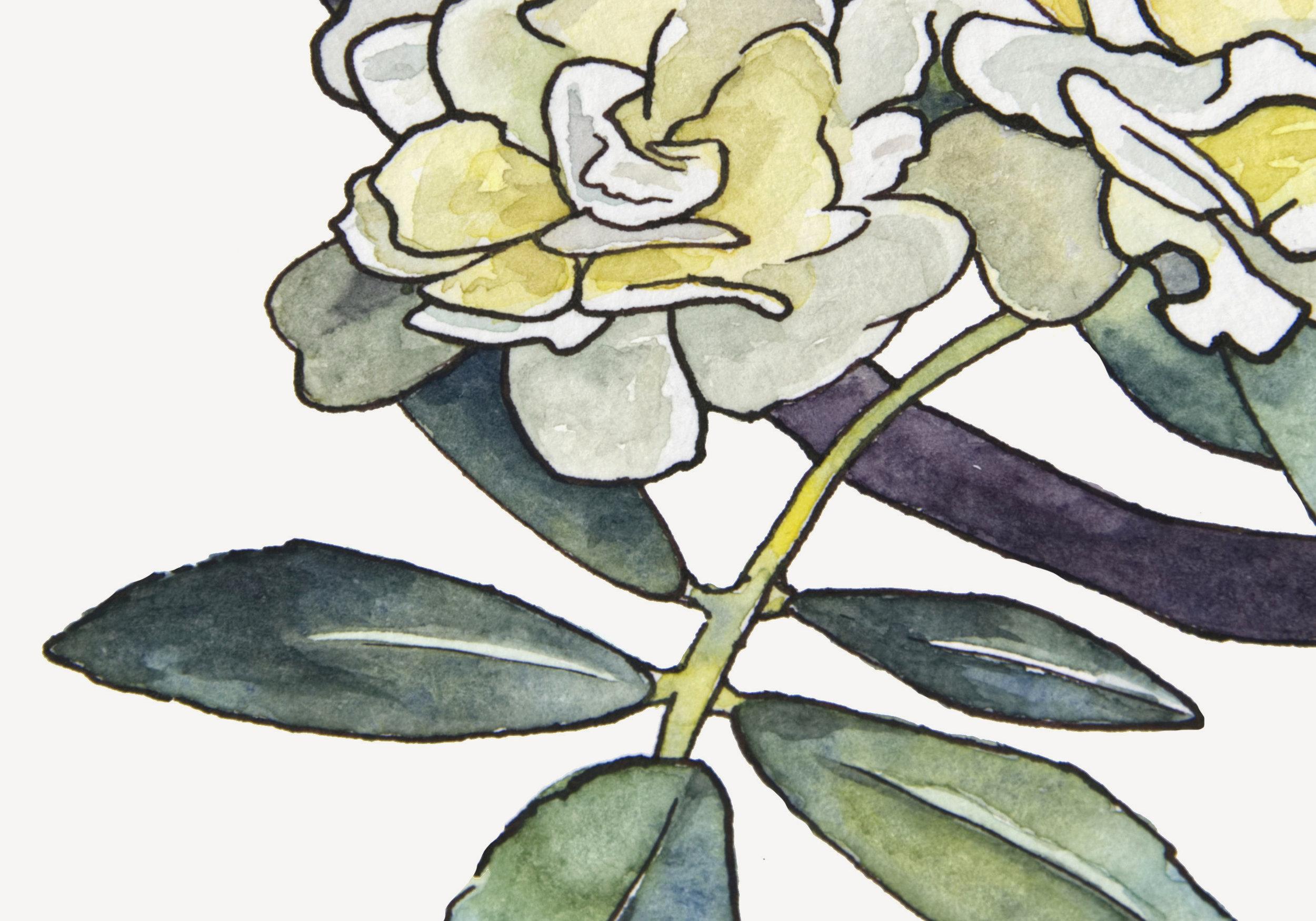 Lady Banks Rose detail web.jpg