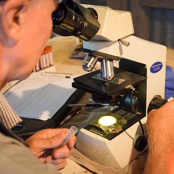 microscope 600px.jpg