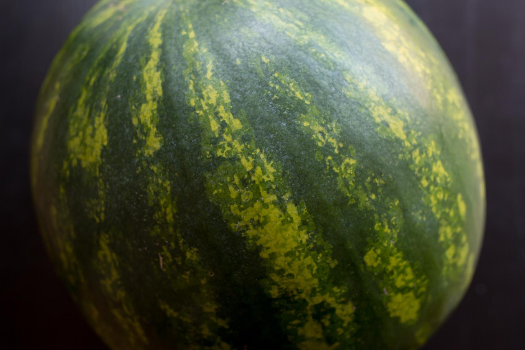 melon-15.jpg
