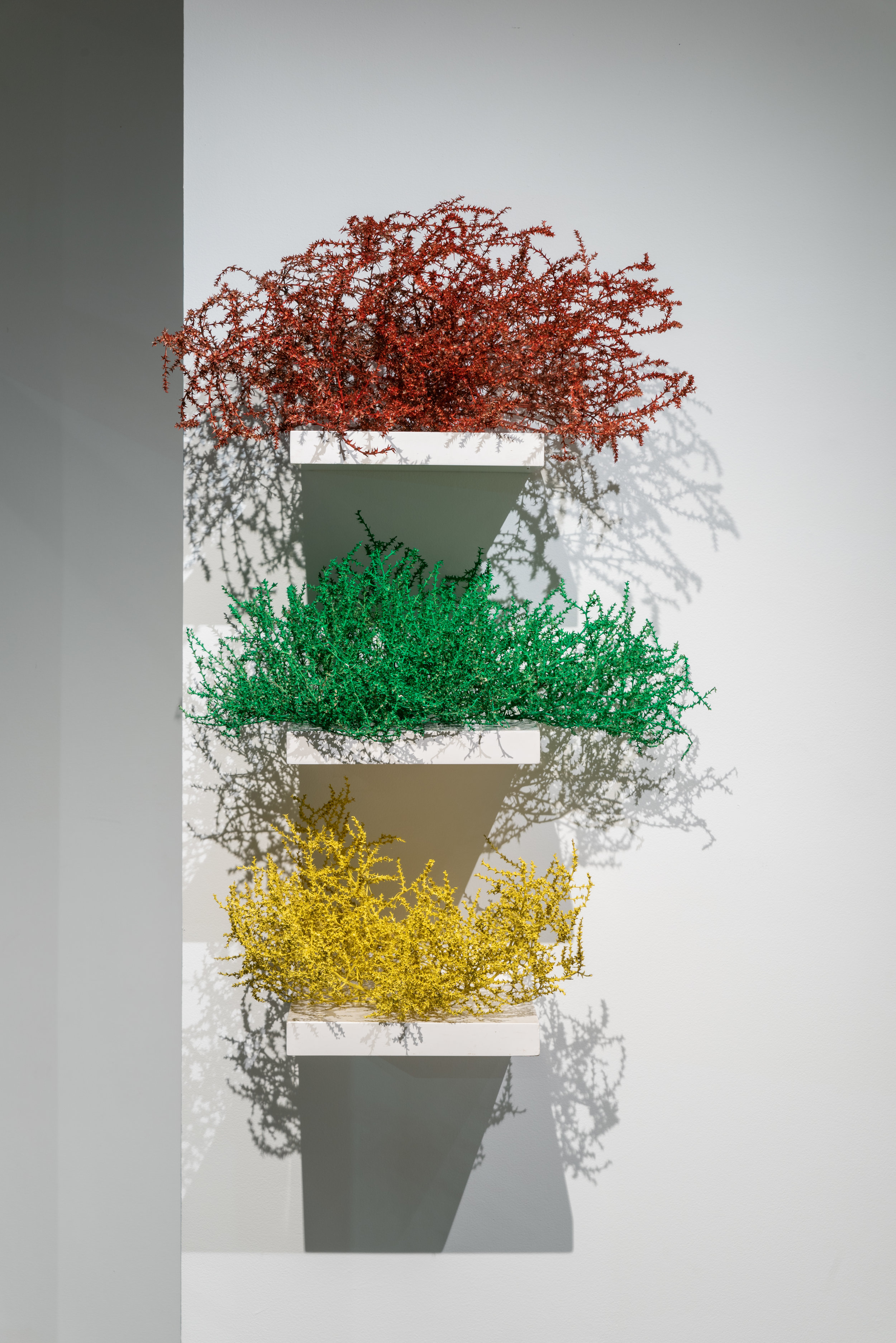 Untitled (Tumbleweeds) , 2018  Tumbleweeds, spray paint and shelves  48 x 24 x 14 in.