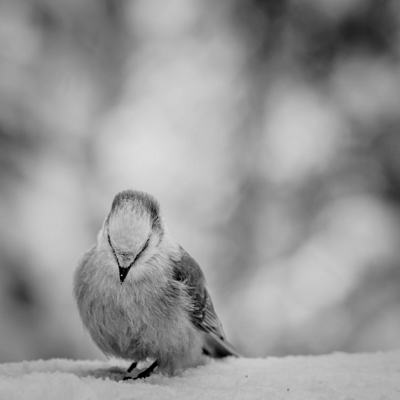 Cold Season-15.jpg