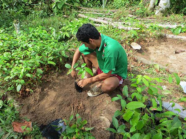 Planting-reforesting-Colombia.jpg