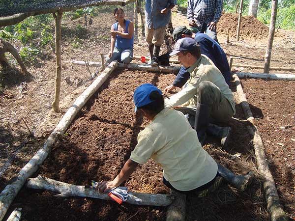 Tree-nursery-reforestation-Colombia.jpg