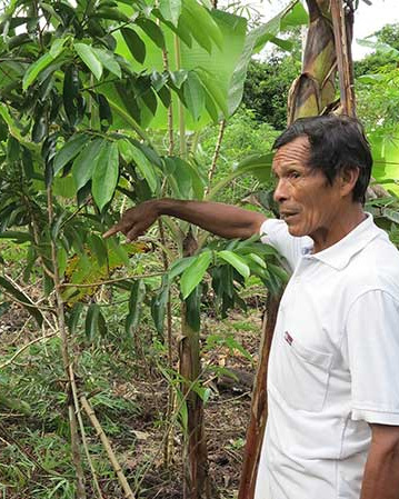Planted_tree_Colombia