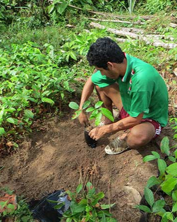 Planting-reforesting-Colombia
