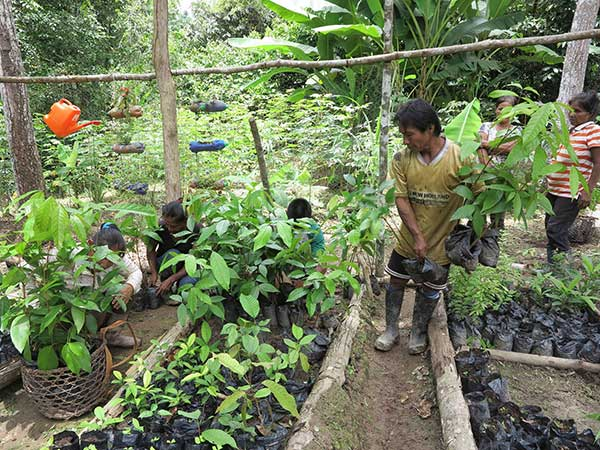 Tree-nursery-Colombia